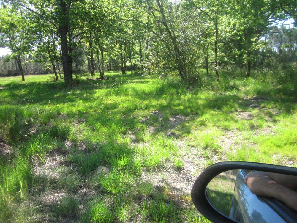 Aire camping-car à Barp (33114) - Photo 3